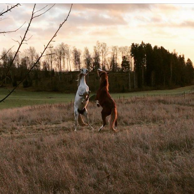 Att ge hästen det den behöver
