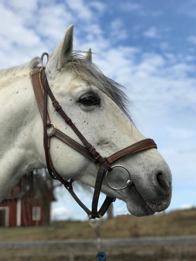 Högkänslig häst