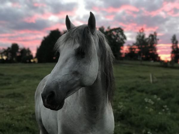 Paus från hästträning